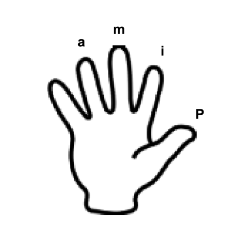notation main droite